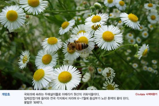 cm_wed_140716.jpg